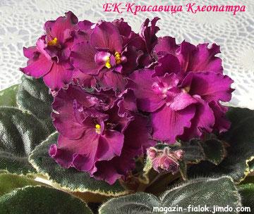 ЕК-Красавица-Клеопатра
