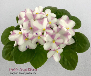 Dixie's Angel Kisses (D.Williams)