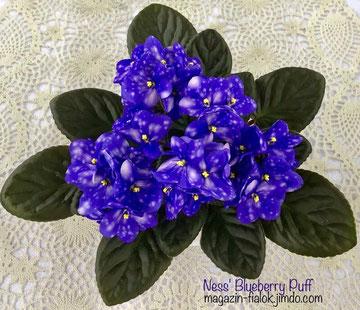 Ness' Blueberry Puff (D.Ness)