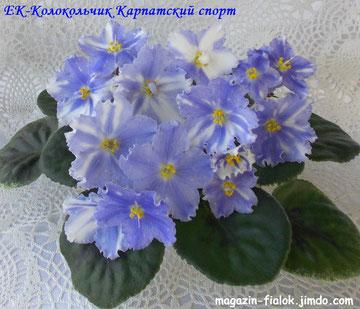 ЕК-Колокольчик Карпатский