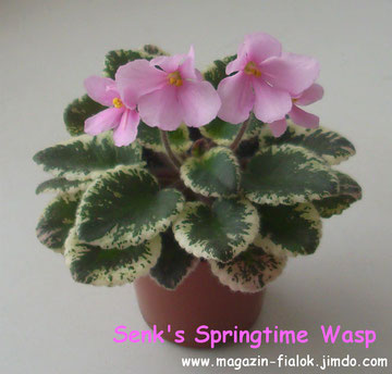 Senk's Springtime Wasp (R.Follet/D.Senk)