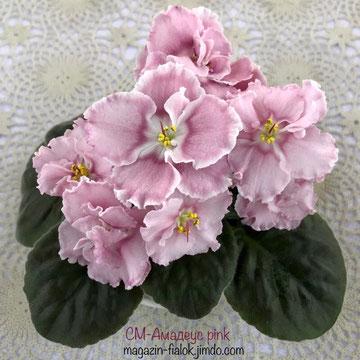 Амадеус pink
