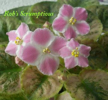 Rob's Scrumptious (R.Robinson)
