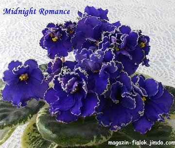 Midnight Romance (Sorano)
