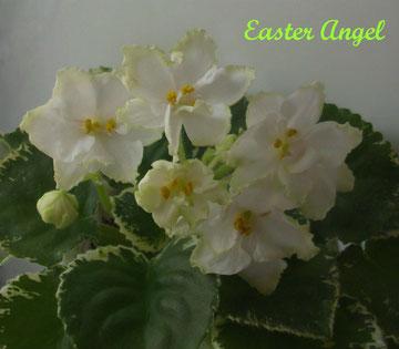 Easter Angel (Sorano)