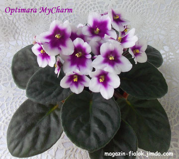 MyCharm(Holtkamp Greenhouses)