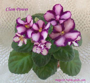 Clam Power (P. Addison)