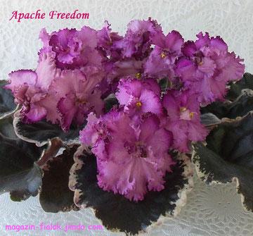 Apache Freedom (Munk)