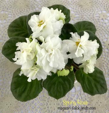 Spring Rose (Lyndon Lyon Greenhouses/P. Sorano)