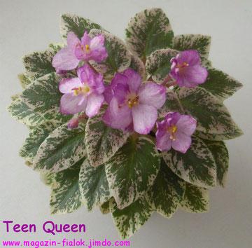 Teen Queen (H.Pittman)