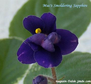 Mac's Smoldering Sapphire (G.McDonald)