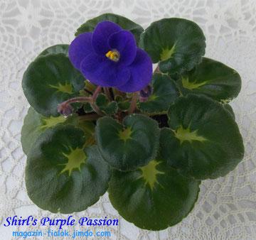 Shirl's Purple Passion (S.Sanders)