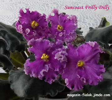 Suncoast Frilly Dilly (Williams)