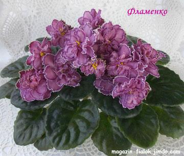 Фламенко (сеянец)