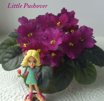 Little Pushover (S.Sorano)
