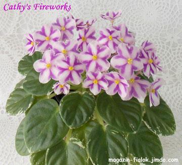 Cathy's Fireworks (C.Cornibe)