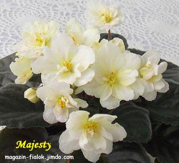 Majesty (Blansit)