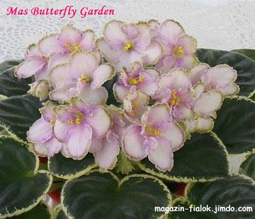 Mas Butterfly Garden (O. Robinson )