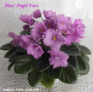Ness' Angel Face (D.Ness)