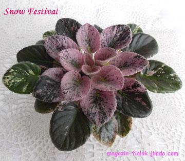 Snow Festival (LLG)