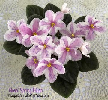 Ness' Spring Blush (D.Ness)