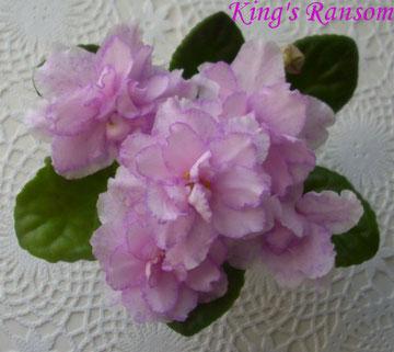 King's Ransom (LLG/D. Herringshaw)