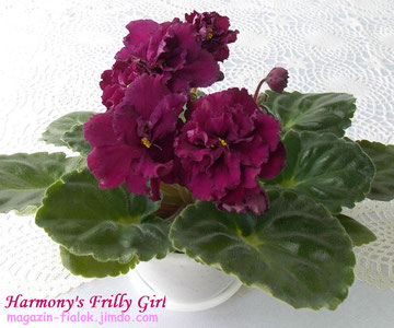 Harmony's Frilly Girl (Harmony's Greenhous)