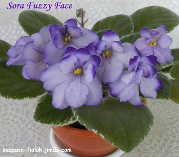 Sora Fuzzy Face (B. Werness/R. Bann)