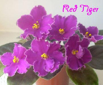Red Tiger (LLG/Sorano)