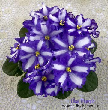 Blue Triumph (P Sorano)