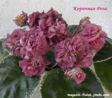 Коричная Роза (сеянец)