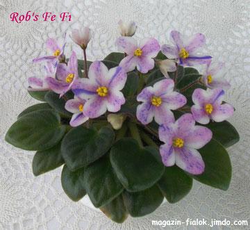 Rob's Fe Fi (R. Robinson)