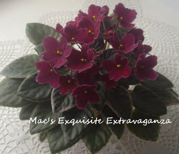 Mac's Exquisite Extravaganza (G.McDonald)