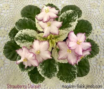 Strawberry Daiquiri (LLG/Sorano)