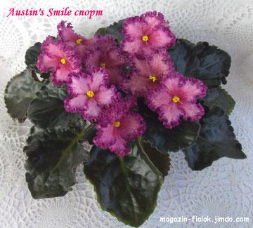 Austin's Smile (спорт)