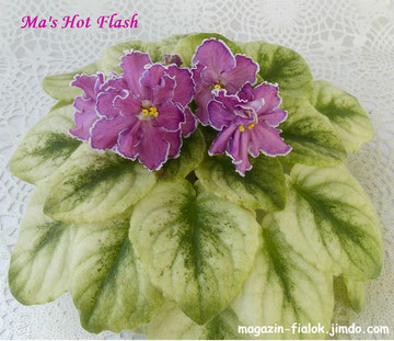 Ma's Hot Flash (Robinson)