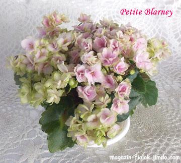 Petite Blarney (H.Pittman)