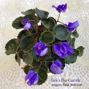 Senk's Blue Cascade (R.Follet/D.Senk)