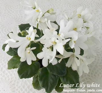 Lunar Lily white