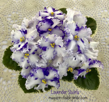Lavender Swirls (S.Sorano)