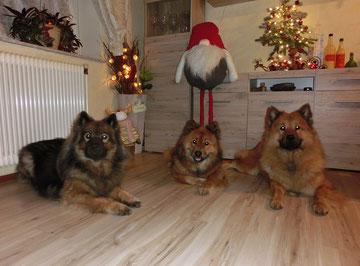 Ylvi, Bia und Ronja - Weihnachten 2019