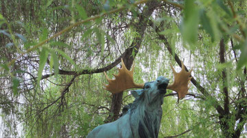 Der Elch im Weidenhof