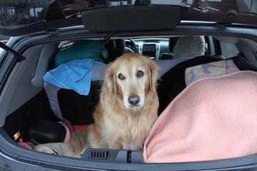 was ist los hier?..sonst war doch der Kofferraum nur für mich alleine !!