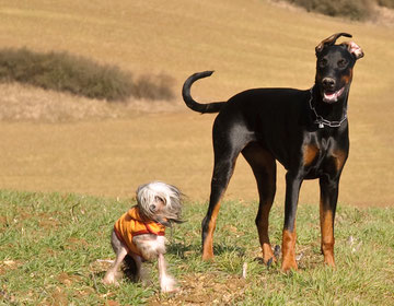 Ferien mit Hund in der Heide