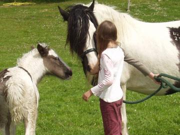 Die meisten Pferde lieben die unbeschwerte, direkte Art, in der Kinder mit ihnen umgehen.