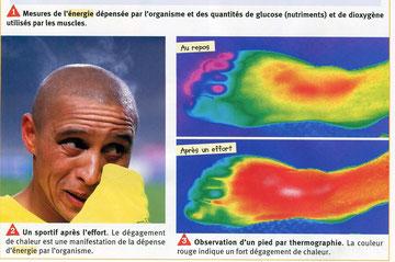 Thermographie des pieds. SVT, Belin, 2009, p56
