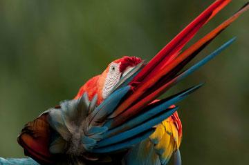 Artenvielfalt im ecuadorianischen Regenwald entdecken