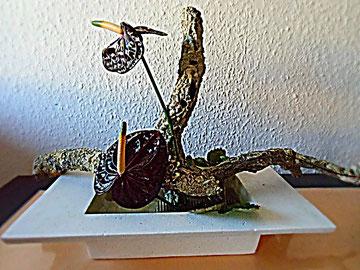 Moribana-schwarze Anthurien mit Korkeiche