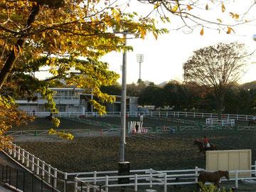 三ツ沢公園馬術練習場