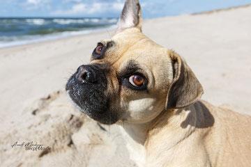 Fotoshooting auf Sylt mit Tierpfoto